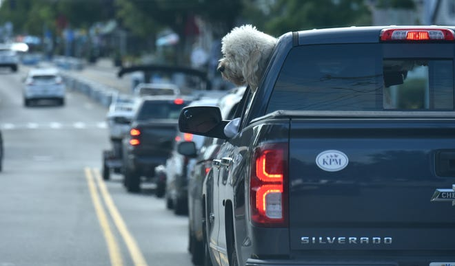 Plenty of brake lights along the one-way stretch of Main Street in Hyannis on a busy Friday afternoon as a sheepdog monitors the traffic.