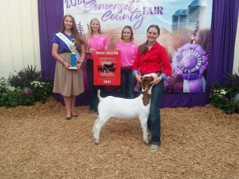 Homegrown Champion Faith Decker (right), 17, of Garrett, won Champion Homegrown Market Goat at the Somerset County Fair on Saturday evening. She is the daughter of Rick and Julie Decker and a member of Buffalo Creek 4-H Club. Also pictured are outgoing fair queen Abigail Knapp and this year's contestants Abby Shuck and Bruck Ohler.