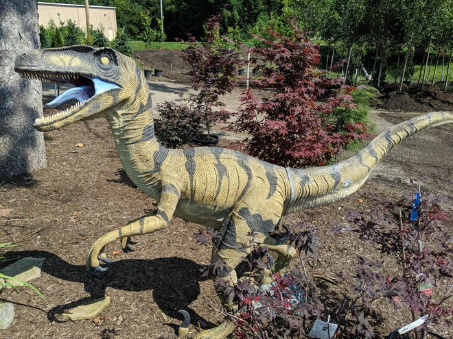 Two ornamental velociraptors has been stolen since July from Stutzman's Lawn & Landscaping in New Philadelphia. They stand five feet tall, and are about nine feet long from nose to tail.