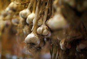 Garlic hangs in the barn at Thaxton's Organic Garlic in Hudson.
