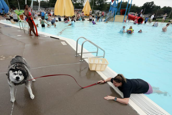 Cassie Curtis tries to coach her Siberian Husky, Legend, back into the pool Saturday during the annual Doggy Paddle to benefit the Des Moines County Humane Society at the West Burlington pool. Microchipping was available at the event as well as nail trimming for the dogs.