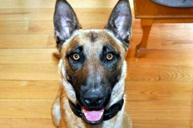 Dover Police have announced the retirement of K9 Barco from the force.