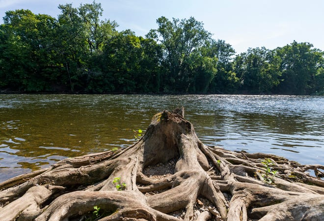 Exposed roots from a decaying tree are seen along the St. Joseph River, near Leeper Park, on Monday in South Bend.