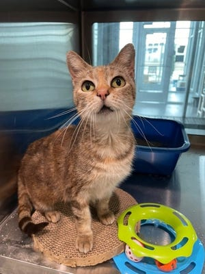Tansy is the Wellington Pet of the Week 8/23/21 - 8/29/21