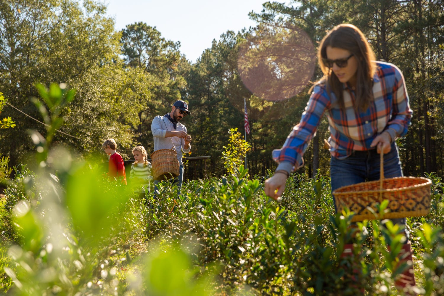 Thomas and Hillary Steinwinder pluck tea with their children at their Longleaf Tea Co. in Laurel, Mississippi.