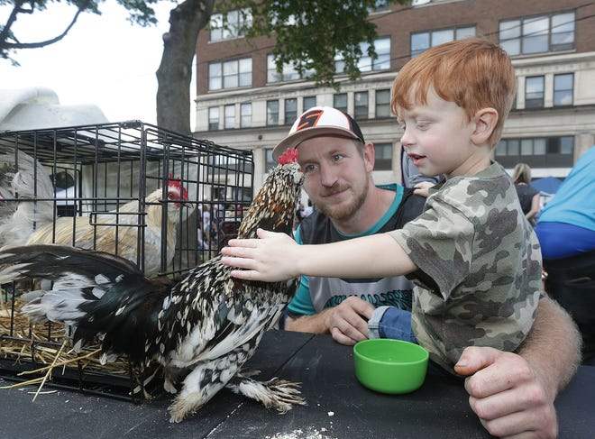 Jerrett Burton, 3, of Massillon along with his father Steve Burton, pet a rooster at the Country Kidz, 4H Club booth at Massillon's Kids Fest on Aug. 14 in downtown Massillon.