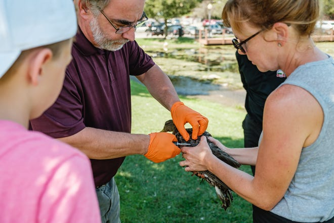 Lucas Croghan, his mother, Kerry, and other son, Jackson, rescue a duck they noticed struggling with a fish hook in its' wing at New Philadelphia's Tuscora Park, Tuesday, Aug. 24. After calling the city for assistance, two workers from the City Health District — Lee Finley and James Smiraldo, arrived to assist after working a senior day picnic at the park. Lee was able to successfully removed the hook. After attempting to box the duck for transport to a third party for additional care, it flew out to join its brethren down shore. The Croghans, from Coshocton, were visiting the park too feed the duck, and potentially play putt-putt golf.