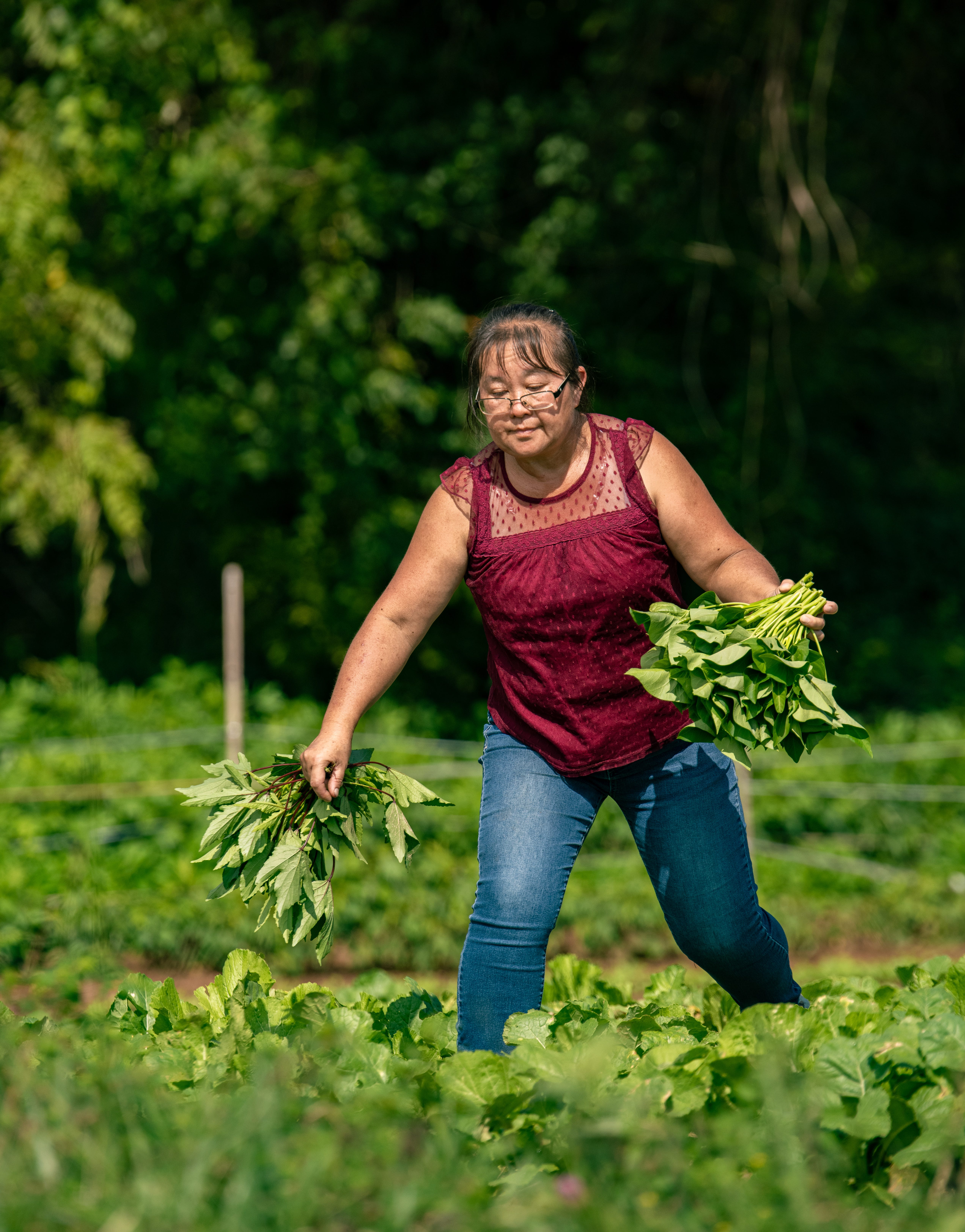 Chue Lee picks water spinach at the Lee family's newest farm on a 94-acre piece of property in Morganton.
