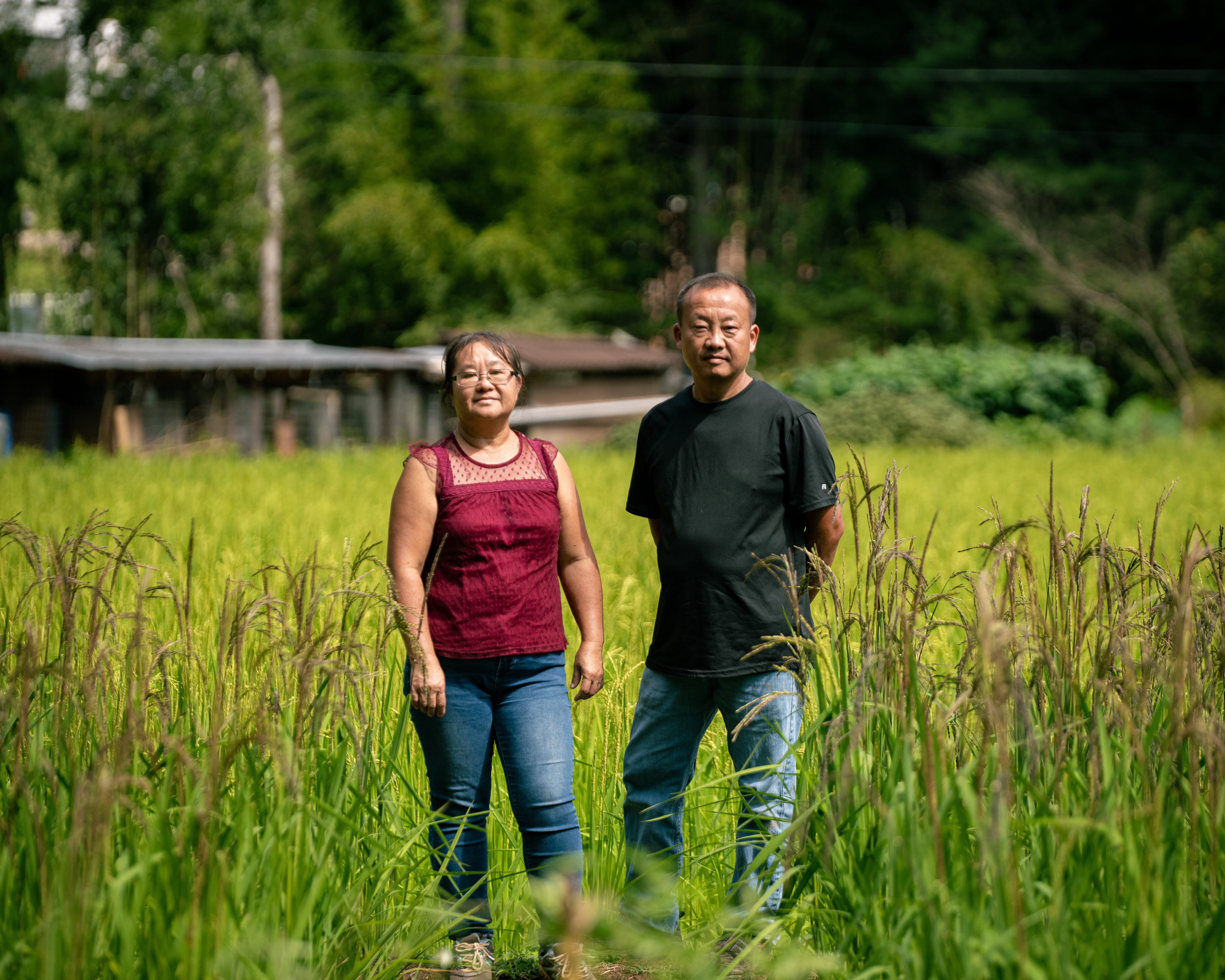 Chue and Tou Lee at the Marion location of Lee's One Fortune Farm, a patchwork of family-managed farms in Western North Carolina producing Asian specialty produce and traditional sticky rice.