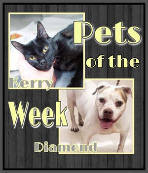Pets of the Week: Kerry and Diamond https://www.burlingtoncountytimes.com/story/lifestyle/2021/08/27/pets-week-beat-heat-and-adopt-senior-dog-young-cat/8189648002/