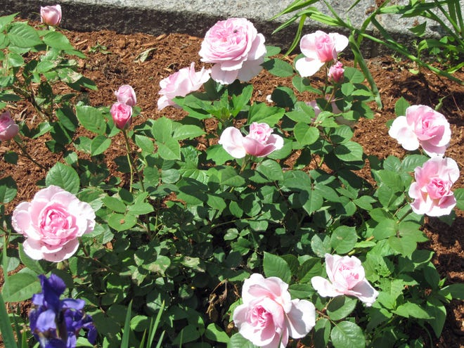 There are many gardens to enjoy while walking along the Southwest Corridor Park in the South End.