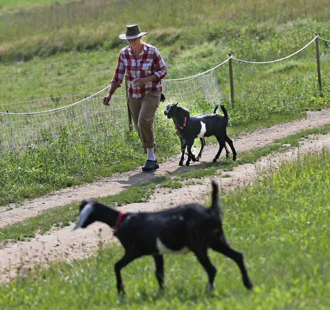 Farmer Elizabeth Haskett works with livestock as an owner of Capricorn Rising Ranch, which participates in the community farm at Crows' Feat Farm Aug. 25, 2021.
