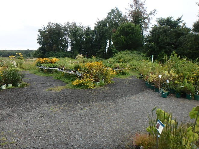 At Nasami Farm, many species of wildflowers, trees and shrubs are produced from seed.