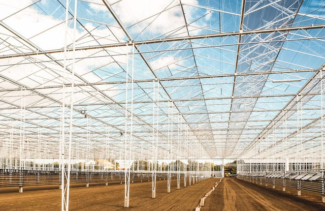 A photograph on the Rhode Island Grows website shows what Schartner Farms' glass-encased hydroponic greenhouse will look like. Two-story-high plants will grow year-round, producing 15 million pounds of beefsteak tomatoes a year at the Exeter facility.