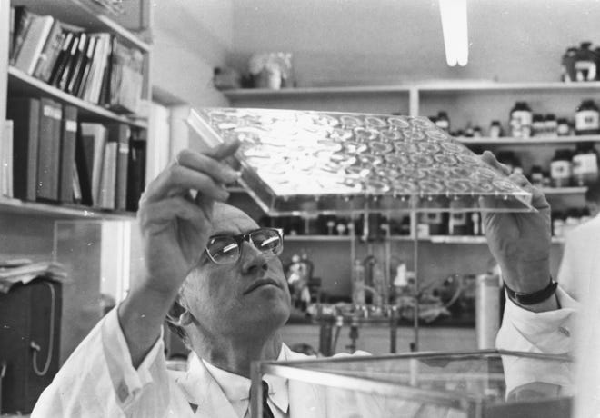 Medical researcher Dr. Jonas Salk studying slides in his laboratory, following the invention of his pioneering polio vaccine, circa 1957.