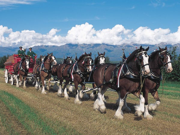 The Budweiser Clydesdales will be in the Hog Days parade and stay around a bit afterward to visit.