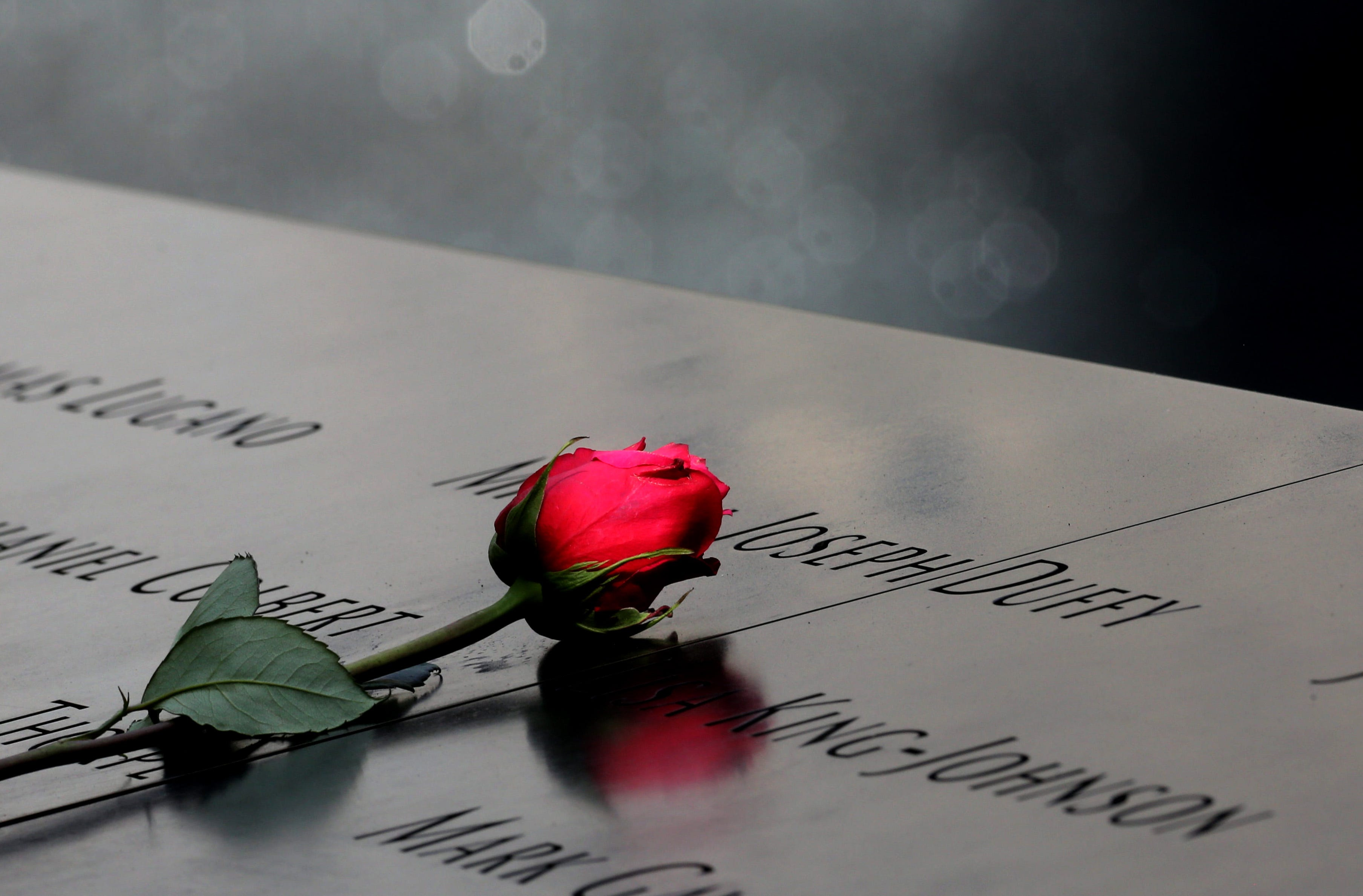 A rose sits atop names engraved around the reflecting pools at the 9/11 Memorial during a ceremony marking the 15th anniversary of the attacks.