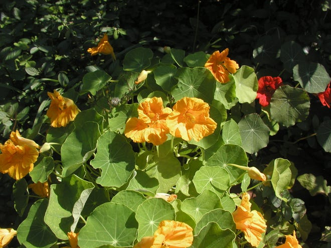 The Brevard Discovery Garden Fall Edible (& more) Plant Sale will be Sept. 25.