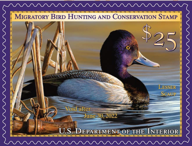 The 2021-22 Federal Duck Stamp features a drake lesser scaup near cattails and floating duck calls. The U.S. Fish and Wildlife Service announced on Tuesday that beginning with the 2022 contest a hunting element such as a duck call or decoy will no longer be required in art submitted for the annual stamp competition.