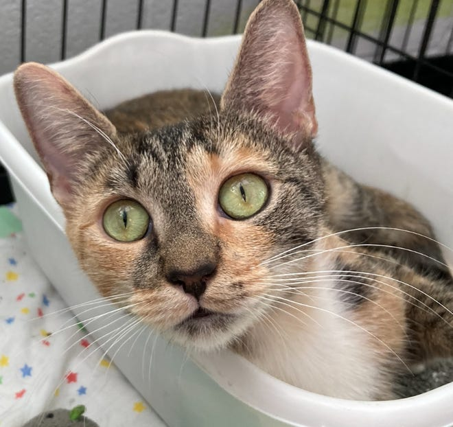 Melody is available at EGAPL Heart of RI Animal Rescue League, in Cranston.