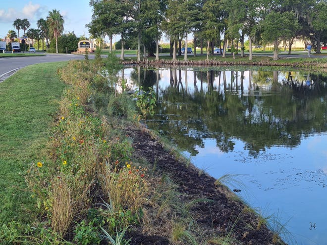 Plants in and along stormwater ponds can help absorb excess nutrients, reducing pollution and potentially red tide outbreaks.