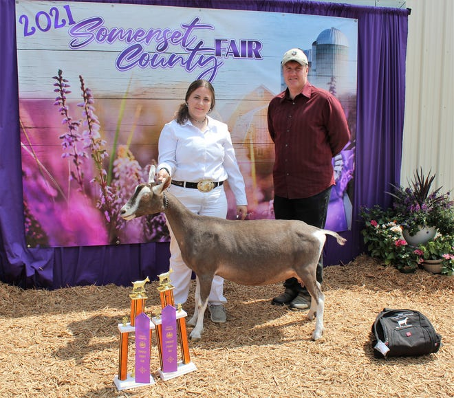 """Champion Senior Doe Kylie Weigle, 14, of Shanksville won Senior Champion during the Dairy Goat Show at the Somerset County Fair on Sunday with her Toggenburg goat named """"Piper."""" She is the daughter of Aleaha Weigle and a member of Milksquirts 4-H Club."""