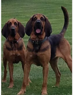 """Marianne and Earl, two purebred bloodhounds from Bellville, make appearances in country gospel musician Joe Richard's music video on the album, """"Roots."""""""