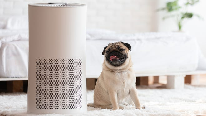 Here's why you should be using an air purifier—stat