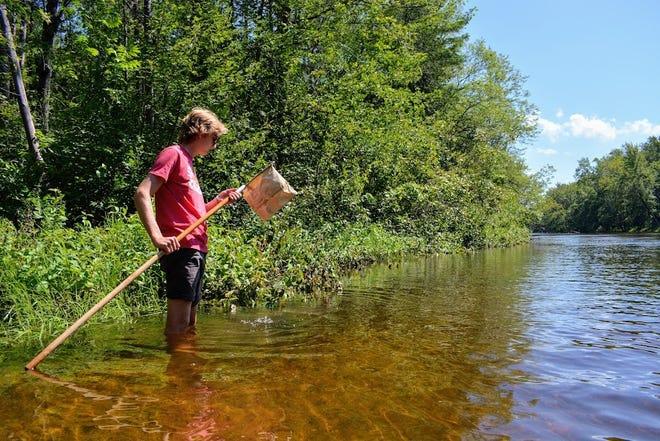 Brett Budnik with Alpena Boys & Girls Club dips for macroinvertebrates on the Thunder Bay River in August.