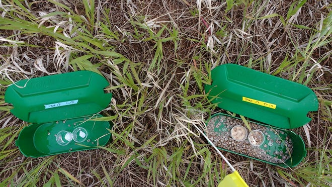 Two slug traps, (left) one baited with water and (right) one with bread dough, used in recent research to better understand what foods best attract mollusks.