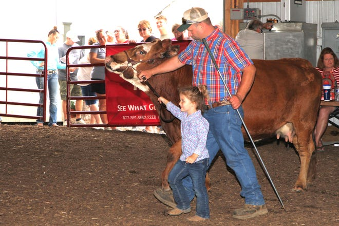 Maren Carpenter, 3 of Helena gets help showing her cow, from her dad C.J., at the Sandusky County Fair on Friday.