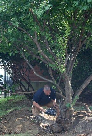 Adam Brock cuts down a tree in the former Pleasant Street School's front yard in hopes of reaching a time capsule buried by the last graduating class 30 years ago.