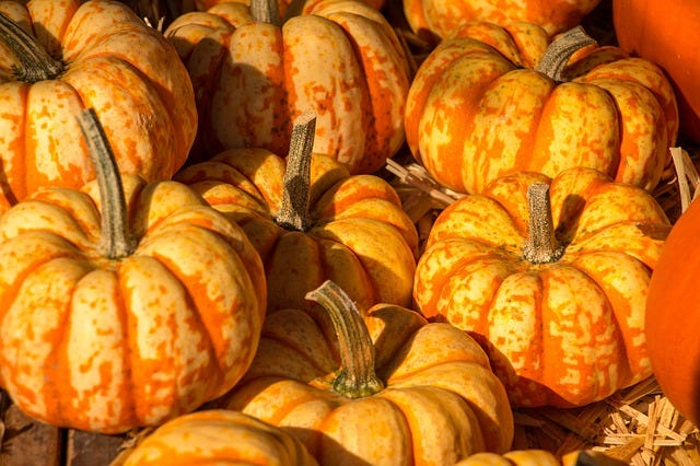 Boyne City's Harvest Festival will take place from 8 a.m. to 4 p.m on Saturday, Sept. 25.