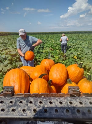 Gail's Pumpkin Patch opened September 1 and will close for the season Oct. 31.