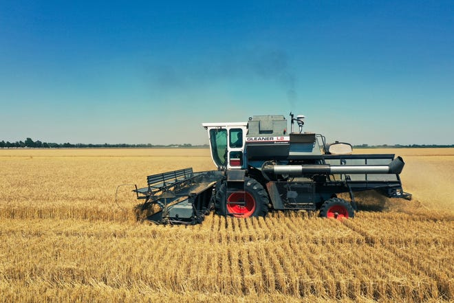 A combine harvests wheat near Mount Hope in Sedgwick County.