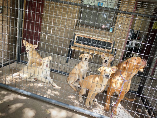 This mother dog and her five puppies are some of the animals available for adoption at the Ardmore Animal Shelter. All adoptions this week will cost $10.
