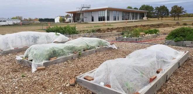 Fabric row covers can be used to protect vegetable crops during periods of cold temperatures.