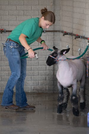 Anna Lowers washes her goat, Whitmore, at the Noble County Fair.