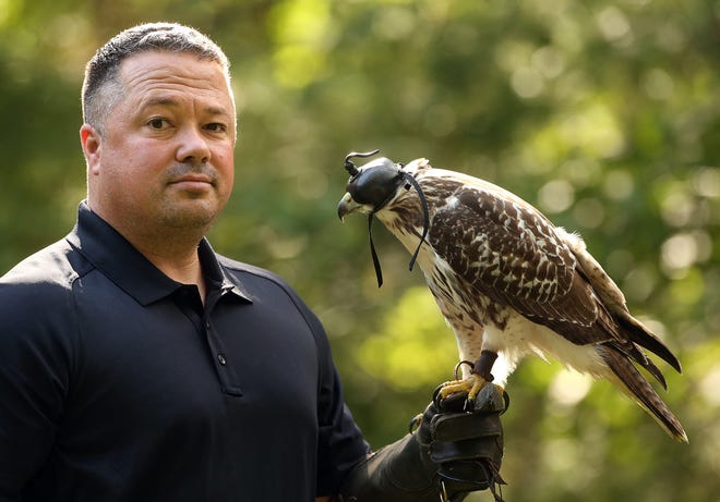 Jack Billings, a Rhode Island-based raptor expert who will be the headliner at the Audubon Raptor Weekend on Sept. 11-12, holds a young red-tailed hawk that is in training to be used in falconry.