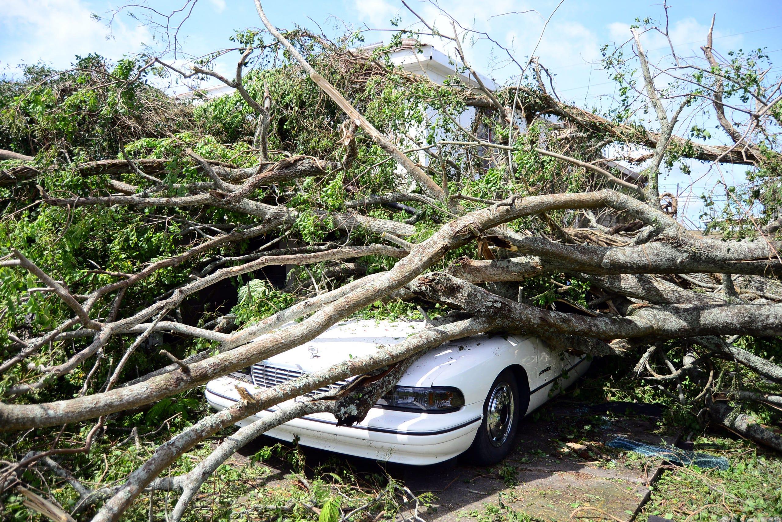 Paten Neville's car is buried underneath a tree that was blown over when Hurricane Ida passed through Terrebonne Parish on Sunday.