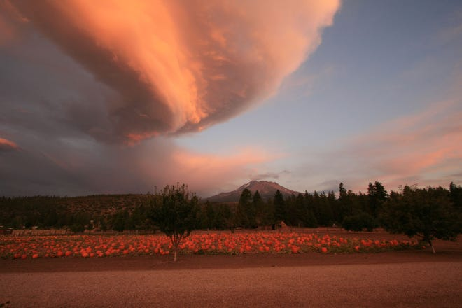 A lenticular cloud gathers over Papa's Pumpkin Patch near Weed with Mt. Shasta in the background in 2012.