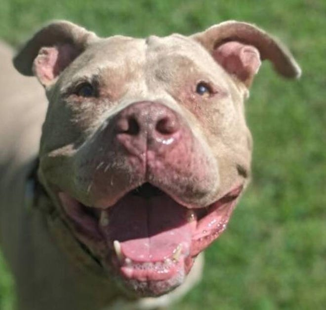 Lola, the Pet of the Week, has a smile for everyone she meets.