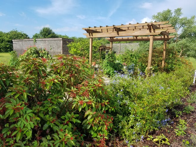 The Brevard Discovery Garden Edible Plant Sale will be Sept. 25 in Cocoa.