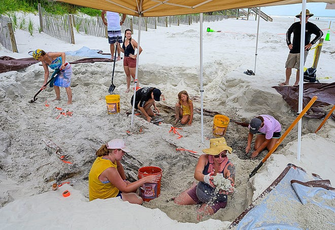 Volunteers and researchers from the St. Augustine Lighthouse Archaeological  Maritime Program dig on the beach, north of the Matanzas Beach ramp, on Tuesday to study what is believed to be the wreck of a 19th-century cargo vessel.