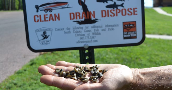 Zebra mussels are spreading in waterways across the state and can cause serious problems.