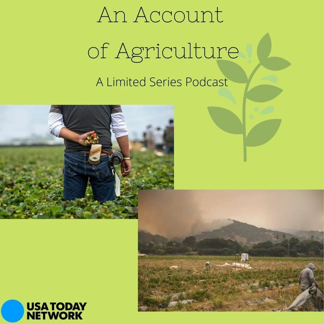 Our latest limited series podcast is about agriculture in the Salinas Valley.