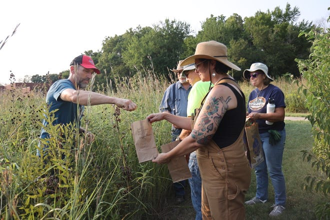 """Members of the Kansas Alliance for Wetlands and Streams and staff of Dyck Arboretumhosteda seed collection at Kauffman Museum in North Newton at 6 p.m. Sept. 1. Dubbed a """"Wetland Wednesday,"""" similar nights are scheduled for Sept.22 and 29. Seeds collected will be used to create a wetlands park in Newton."""