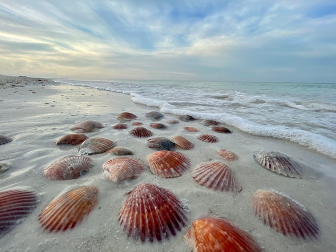 """Diane Suner's """"Sea Scallops at Sunrise"""" won Best in Show with almost 1,000 likes on Facebook in the 2021 Conservation Foundation of the Gulf Coast Summer Photo Contest."""