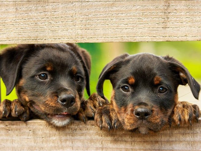 Canine parvovirus, also known as parvo, is one of the most fatal viruses a dog can contract.