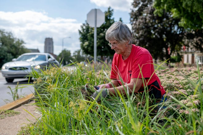 """Pennfield resident Nellie Briggs voluntarily pulls weeds from a garden along the Maple Street Historic District at Division Street and Capital Avenue Northeast on Wednesday, Sept. 1, 2021 in Battle Creek, Michigan. """"I don't like people coming into Battle Creek and meeting a weed patch,"""" Briggs said."""
